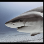 山口達也のサメ駆除(動画画像)。再生心労で通院してる病院はどこ?